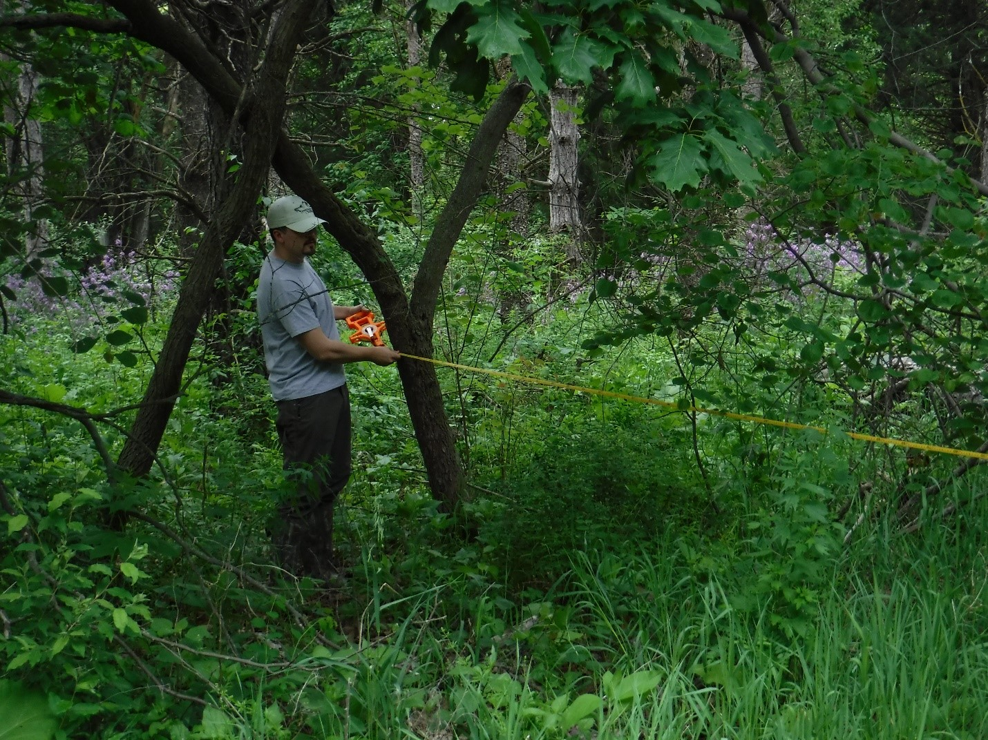 Baxter Seguin measuring distance to trees for stand density at a sampling location east of Lincoln, NE. Photo: Tayelor Gosselin