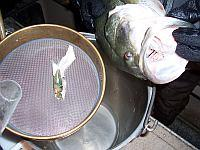 Straining contents of a fish stomach