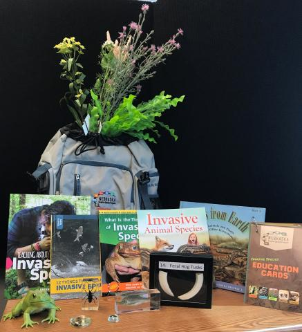 Traveling education trunk contents. Photo: Allison Zach