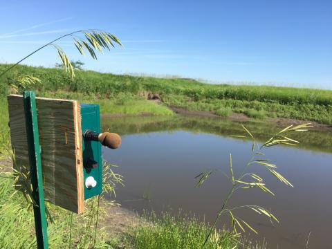 An automated recording device used to sample anuran calling activity at an irrigation reuse pit. Photo: Michelle Hellman