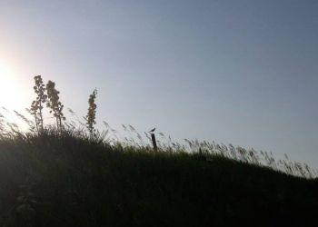 Upland Sandpiper