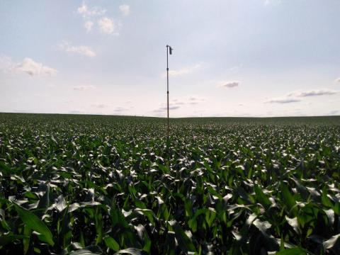 Acoustic bat detector deployed in Gage County, Nebrasaka. Photo: Christopher Fill
