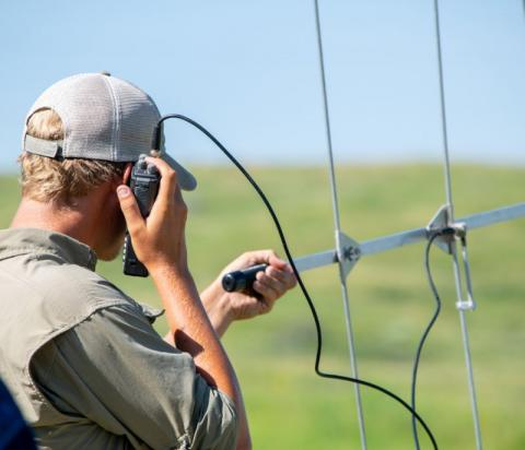 Pheasant tracking. Photo: Tristan Powell